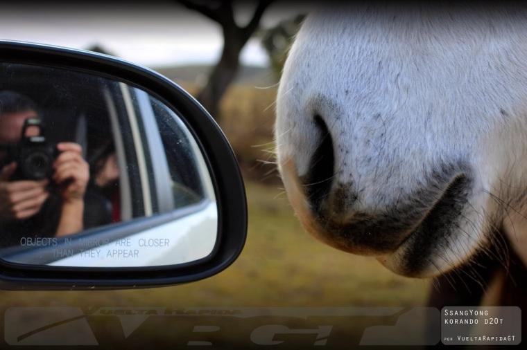 caballos copia